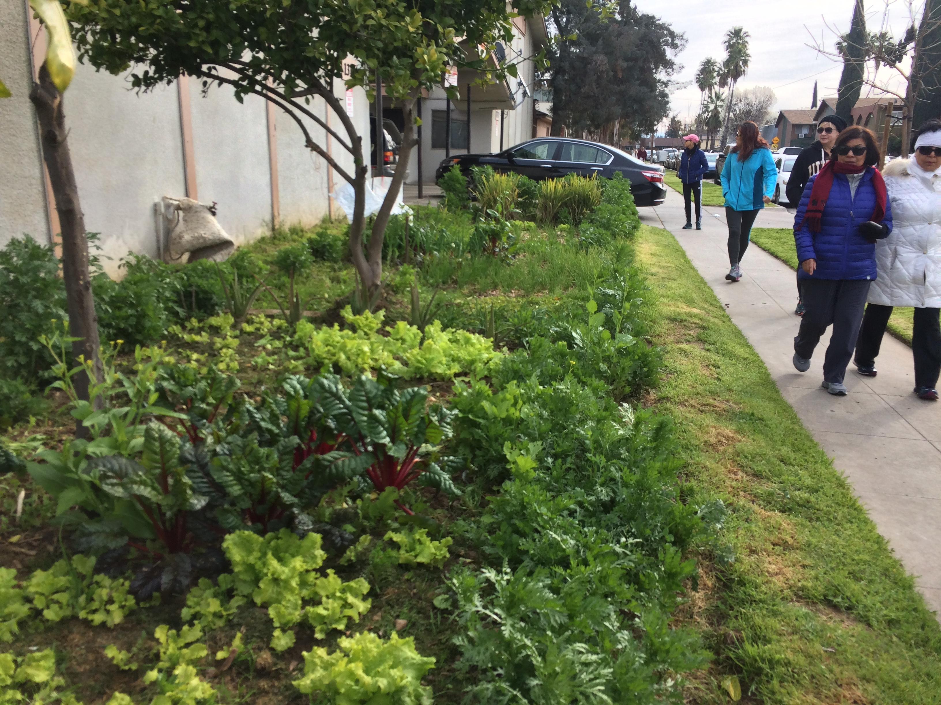 Gardens and other signs of life walk 5 yr 3 el dorado - Fresno home and garden show 2017 ...